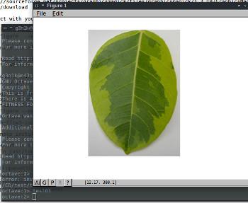 octave-test-image